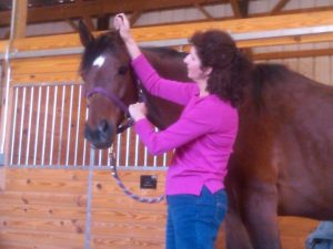 EQUINE BODY WORK CLINIC